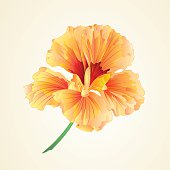 Spring flower watercress vegetable healthy food vector illustration