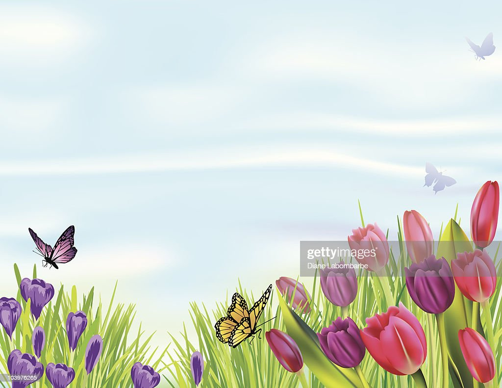 Spring Flowerbed with Tulips and Crocuses : Vector Art