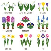 Big vector collection of spring flowers. Flat style.