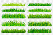Spring green grass borders isolated on transparent background. Vector illustration