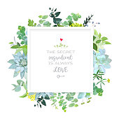 Square botanical vector design frame. Baby blue eucalyptus, echeveria succulents,wildflowers, various plants, leaves and herbs. Natural greenery rustic card. All elements are isolated and editable