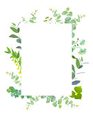 Square botanical vector design frame. Baby blue eucalyptus, capsella, meadow wildflowers, various plants, leaves, greenery and herbs.Natural greenery rustic card.All elements are isolated and editable