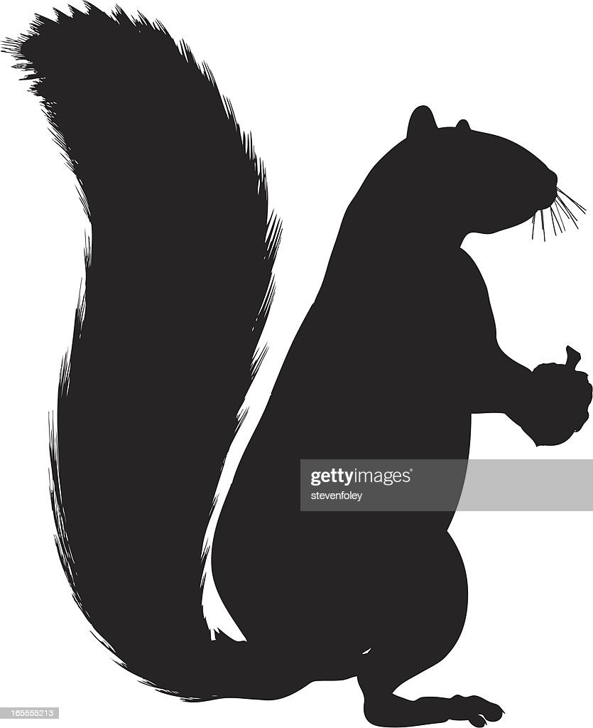 squirrel silhouette on white background vector art  getty images - squirrel silhouette on white background  vector art