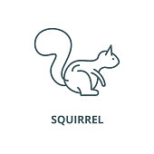 Squirrel vector line icon, outline concept, linear sign