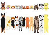 standing dogs and cats front and back border set.