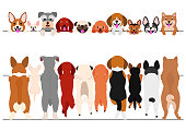 standing small dogs front and back border set.