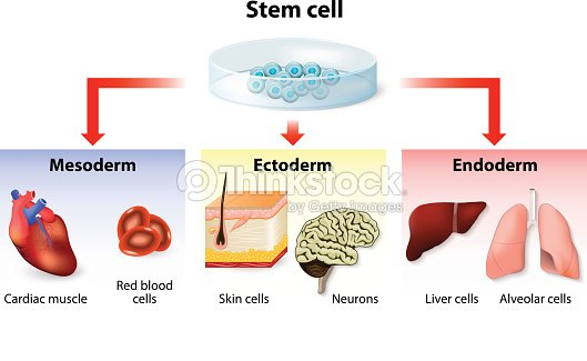 Stem Cell Application Vector Art | Thinkstock