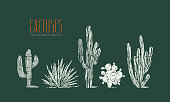 Stock vector set of hand drawn cactus. Illustration in linocut style. Different forms of plants with rough texture. Print on green background