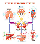 Stress response system vector illustration diagram, nerve impulses scheme. Educational medical information. Expressive cartoon characters.