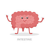 Strong healthy intestine cartoon character isolated on white background. Happy small and large intestines icon vector flat design. Healthy organ concept medical illustration