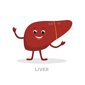 Strong healthy liver cartoon character isolated on white background. Happy liver icon vector flat design. Healthy organ concept medical illustration