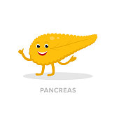 Strong healthy pancreas cartoon character isolated on white background. Happy heart icon vector flat design. Healthy organ concept medical illustration