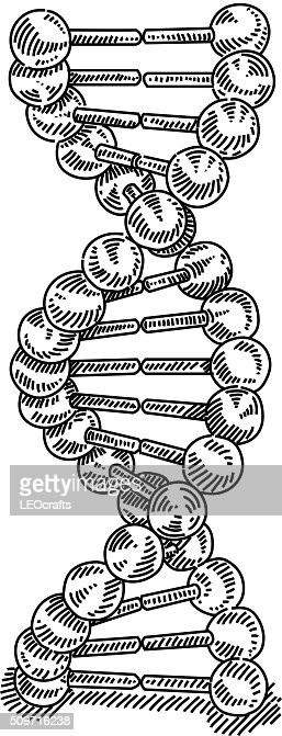 dna structure diagram drawing structure diagram of animal cell dna structure drawing vector art | getty images