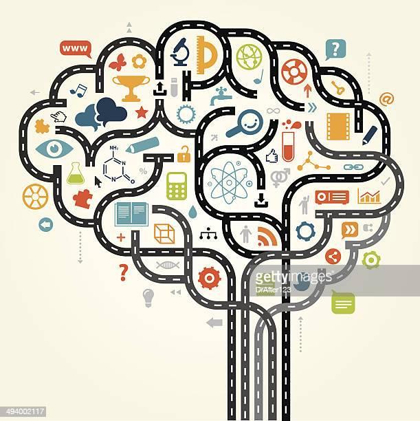 Studying Brain