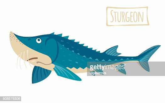 Sturgeon : Clipart vectoriel