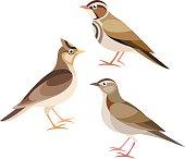 Stylized Birds - Lark, Skylark, Woodlark