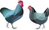 Stylized Chicken - Australorp Breed