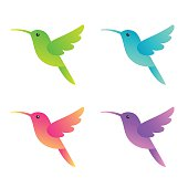 Stylized hummingbirds set in four different colors for icon or logo. Isolated vector colibri illustration.