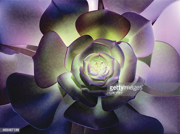 Succulents-Illustration vectorielle