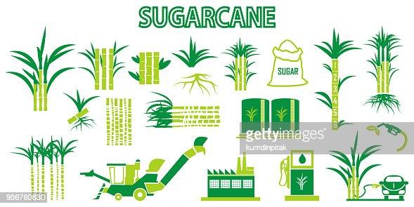 Vector De Iconos De La Caña De Azúcar Arte Vectorial