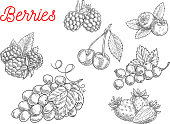 Summer fruit and berry sketch. Fresh raspberry, strawberry, grape, cherry, blackberry, currant and blueberry fruits with leaves for food and agriculture design