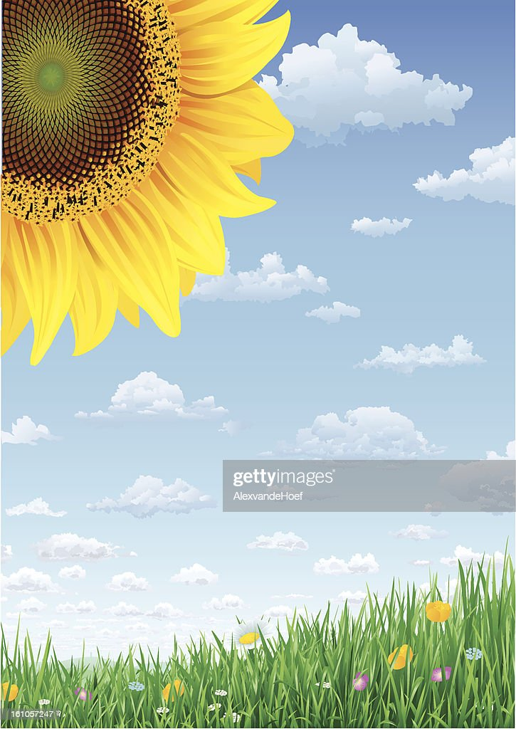 Sunflower Grass and Sky with Summerclouds : Vector Art