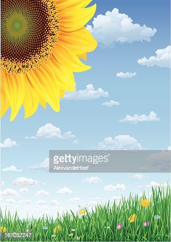 Sunflower Grass and Sky with Summerclouds : Vektorgrafik