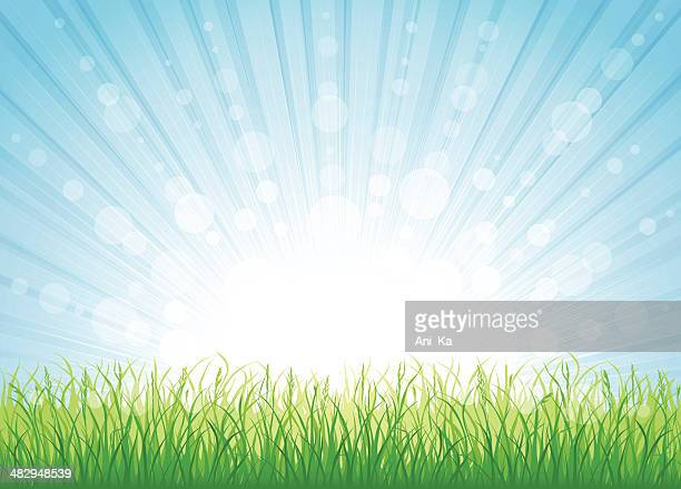 Sunny day background with grass