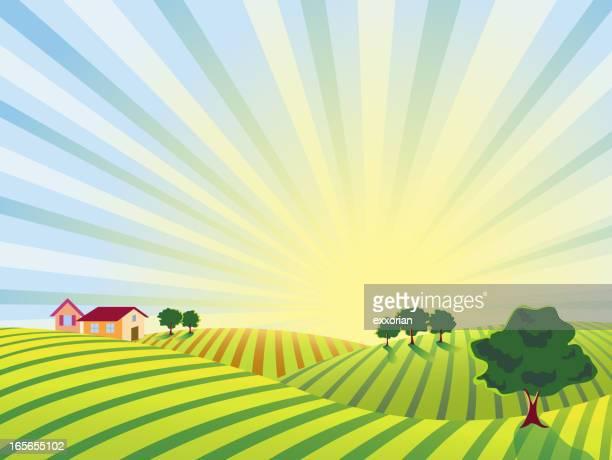 Lever du soleil dans la campagne