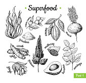 Superfood hand drawn vector illustration. Botanical isolated sketch drawing. Spirulina, cocoa, quinoa carob moringa goji, maca. Organic healthy food. Great for banner, poster, label