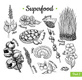 Superfood hand drawn vector illustration. Botanical isolated sketch drawing. Chia, wheat grass, baobab guarana acai flax, camu camu. Organic healthy food. Great for banner, poster, label