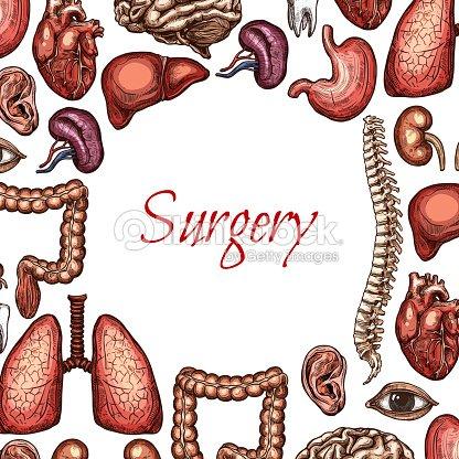 Chirurgieposter Mit Menschliche Organ Skizzieren Sie Körperteile ...