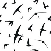Swallow, swift, birds. Graphic vector pattern