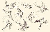 Swallows flying bird set vintage illustration, engraved retro style, hand drawn, sketch