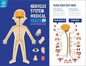 System nervous. Sympathetic system. Infographic element.