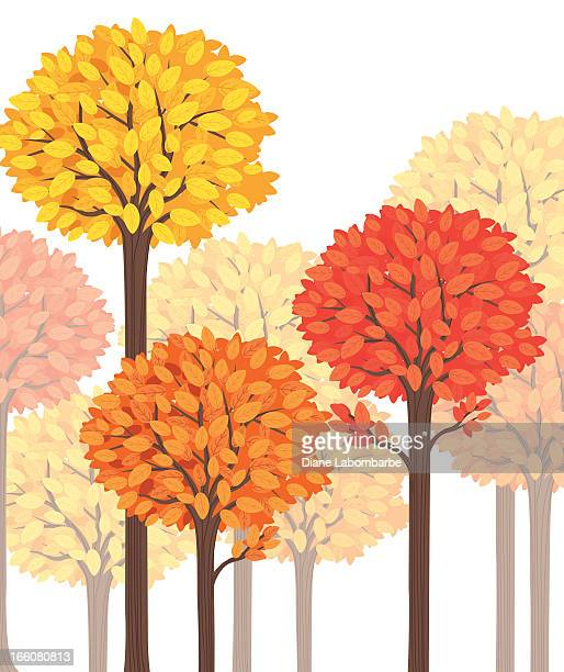 Tall Fall Forest Trees Illustration