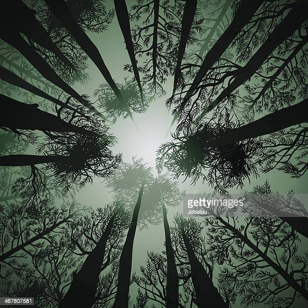Große Pines