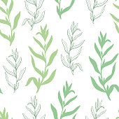 Tarragon herb graphic green sketch seamless pattern background illustration vector