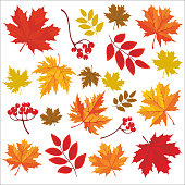 Isolated colored autumn leaves. Vector set of hand drawn llustrations on white background.