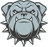 Vector illustration head ferocious bulldog mascot, on a white background.