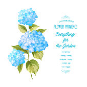 Hortensia flower. Blue realistic hydrangea. Illustration of flowers. Vintage art. Can be used for invitation card. Vector illustration.