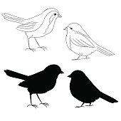 The outline and of the silhouette of the birds fifth set vector illustration
