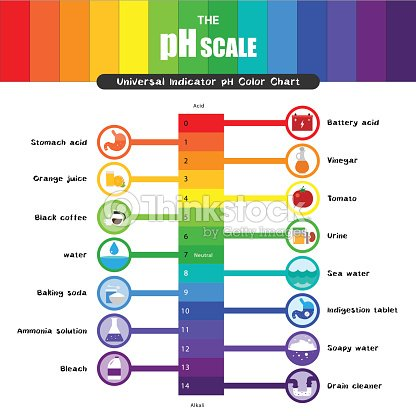 The Ph Scale Universal Indicator Ph Color Chart Diagram Vector Art