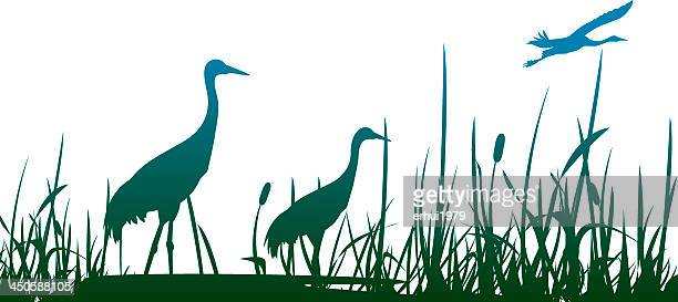 Three crowned cranes in a marshy area with one flying
