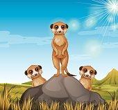 Three meerkats standing on the rock illustration