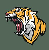 Vector illustration Tiger fierce with open mouth
