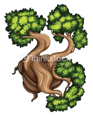 Topview Of A Bristlecone Pine Tree stock vector - Thinkstock