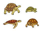 Set of tortoise and turtle - vector illustration. EPS8
