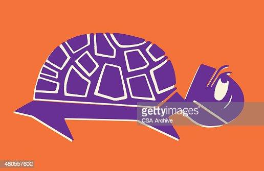 Tortoise : Vector Art