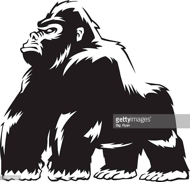 Silverback Gorilla Vector Art And Graphics | Getty Images